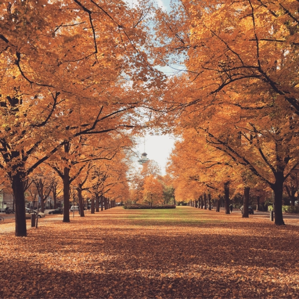 autumninrotterdam3