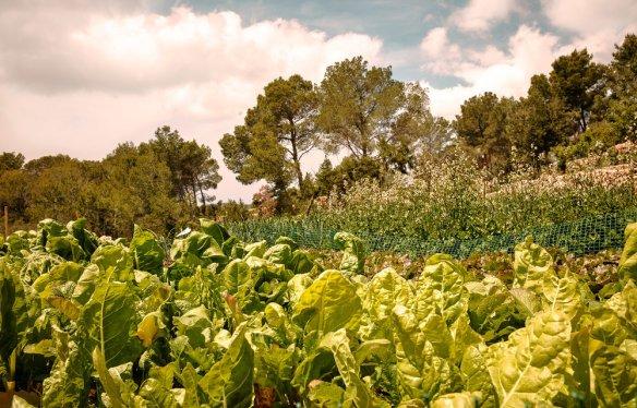 la-granja-ibiza-farm-009